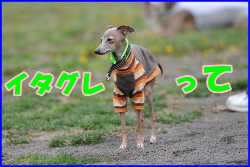 DSC_3788_20110508015134.jpg