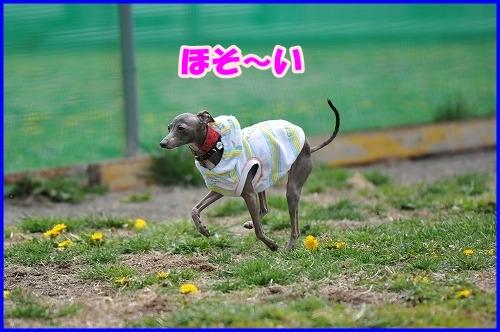 DSC_3823_20110508015215.jpg
