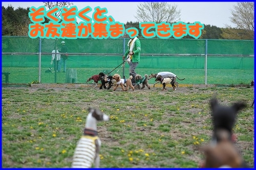 DSC_3870_20110508015132.jpg