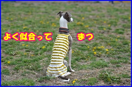 DSC_3873_20110508015504.jpg