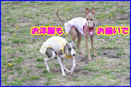 DSC_4059_20110508015505.jpg
