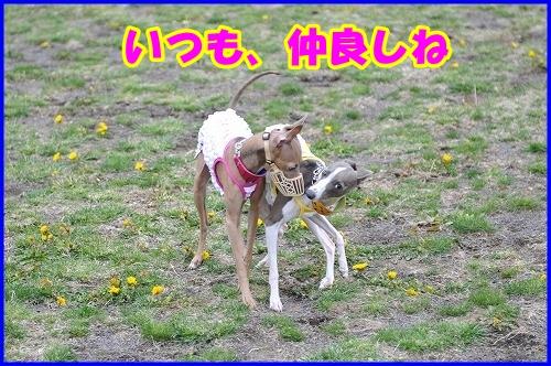 DSC_4063_20110508015505.jpg