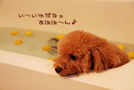 ゆず湯に入っている犬