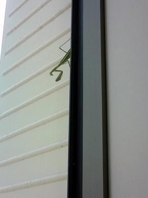 窓の向こうに・・・!