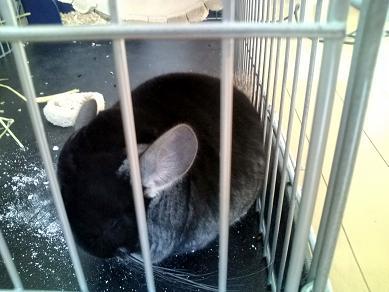 珍しい加奈ちゃんの野良寝