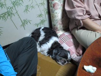 ちびもえ2011GW秋田 022