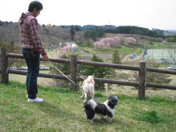 ちびもえ2011GW秋田 038