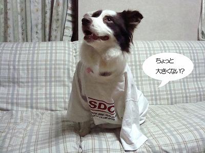 DSC06204のコピー