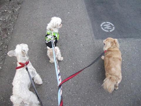 s-みんなでお散歩