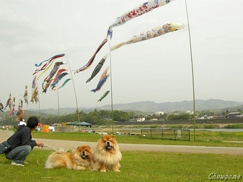 1-20110505.jpg