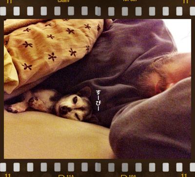 chuchu-sleep-a.jpg