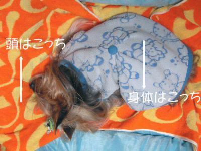 寝ているときは身体と頭が逆方向