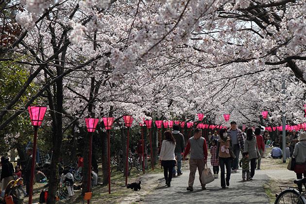 20110410sakura.jpg