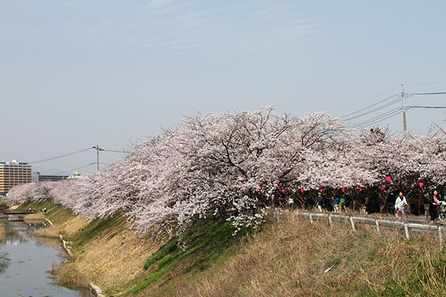 20110410sakura02.jpg