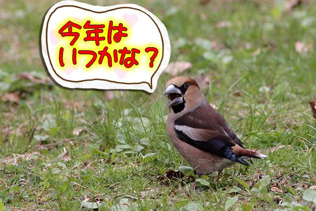 20110413shime.jpg