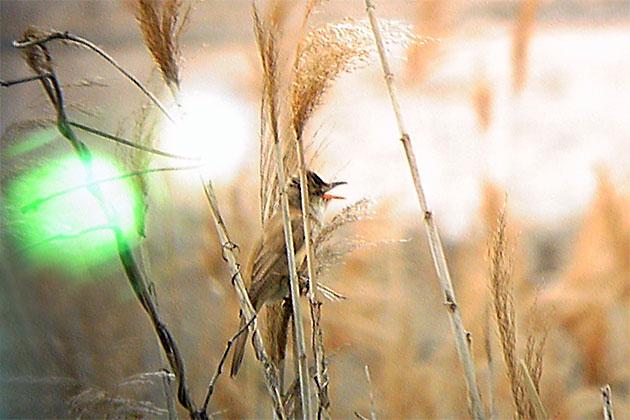 20110501ooyoshikiri02.jpg