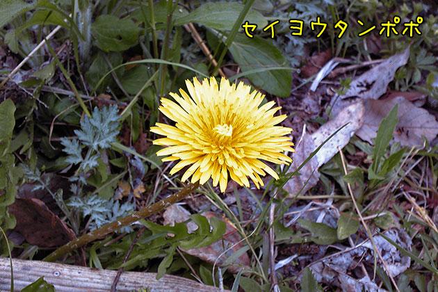 20110510seiyoutanpopo_20110510220034.jpg