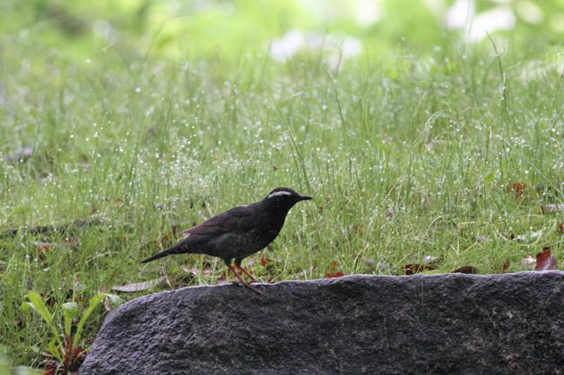 20110512mamijiro02.jpg