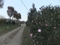 DSCF44901.jpg