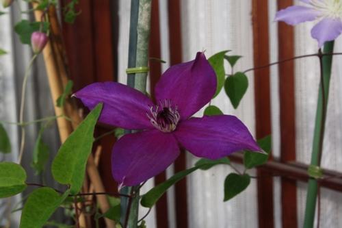 2009♂紫姫×♀フロリダ