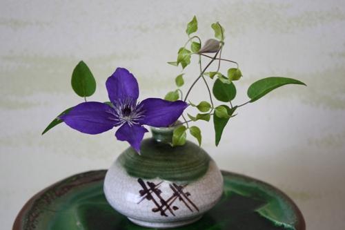 フロリダ×紫姫