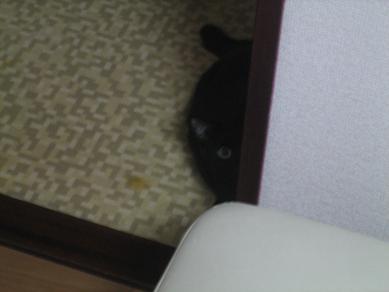 雨の日の黒猫