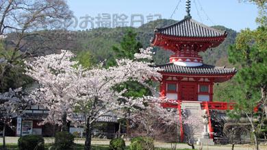 お寺と桜04
