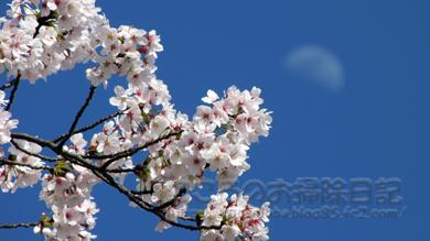 月と桜04