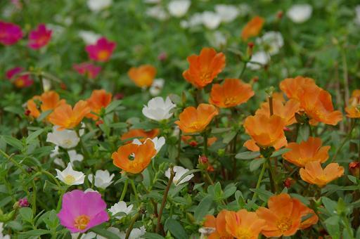 110903-05flower.jpg