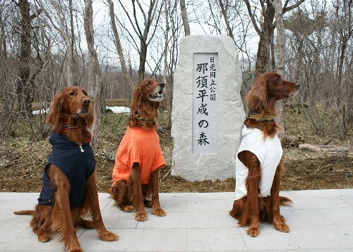 日光国立公園 平成の森 アーリー、コーク、スライゴ