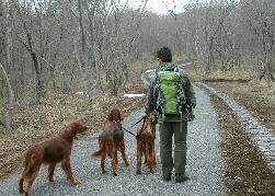 日光国立公園 平成の森 散策