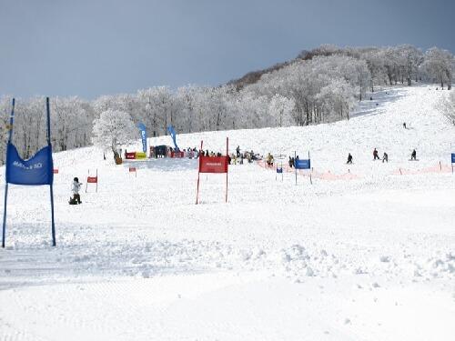 DOGスキー大会風景