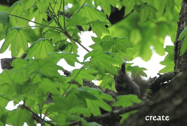 DPP0 668 246木の上から0001