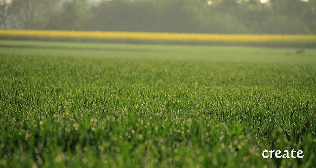 DPP0 668 217小麦の朝露0001