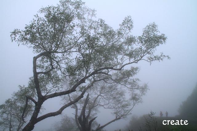 DPP0 668 038霧の中の二人0090
