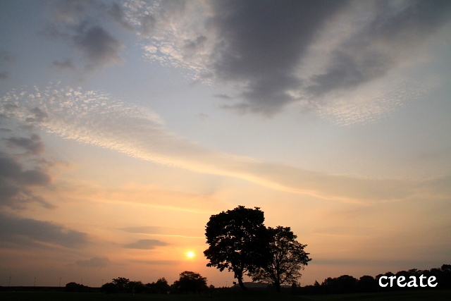DPP0 668 104夕陽と木0122