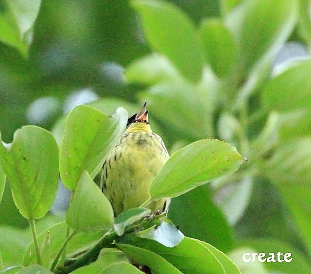 DPP0 668 009野鳥20354