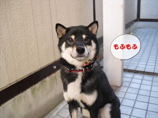 CIMG4143_20110226233040.jpg