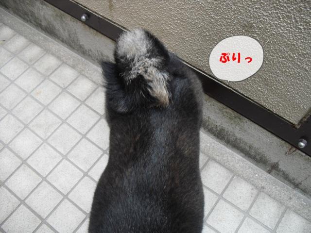 CIMG4598.jpg