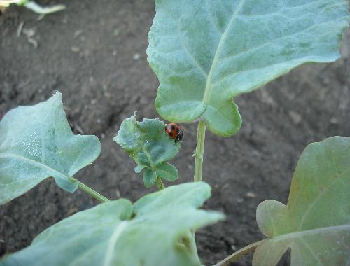 有機栽培の助っ人