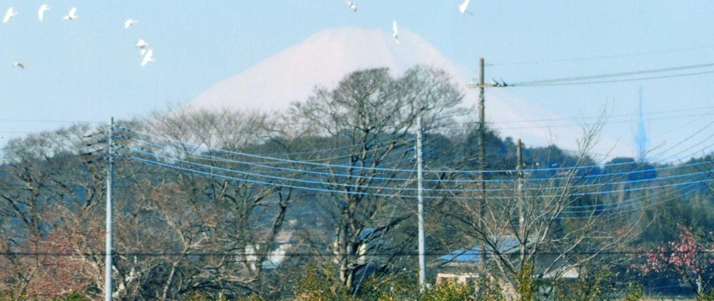 富士山・白鳥・河津桜と東京スカイツリー