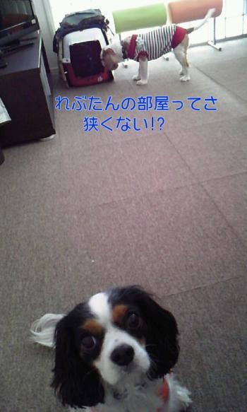 110609_1339+010001_convert_20110609223618.jpg