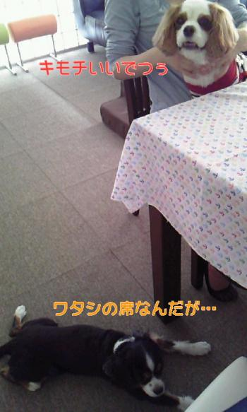 110609_1353+010001_convert_20110609223801.jpg