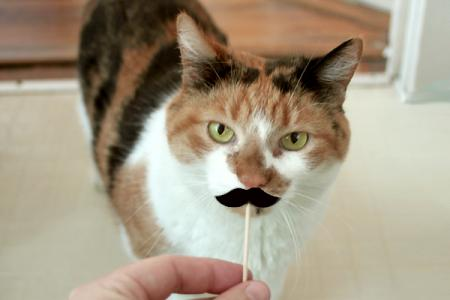 Mustache Stick_4