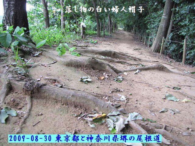 090830shiratori09