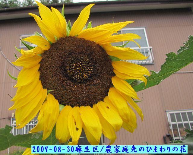 090830shiratori12