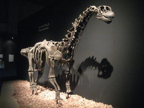 恐竜博20110707-2
