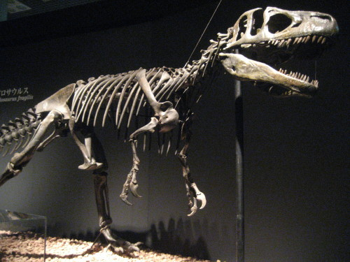 恐竜博20110707-3