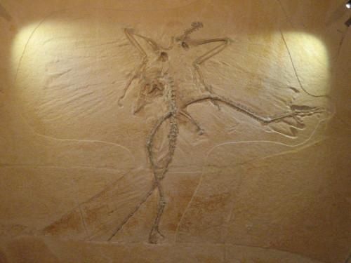恐竜博20110707-4