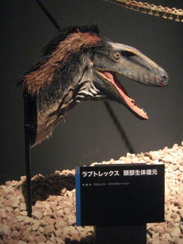 恐竜博20110707-5